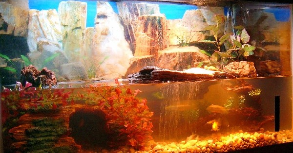 My Turtle and Fish Tank