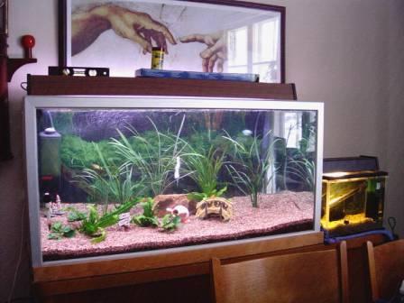 My 250 l tank + my 13 l breeder tank