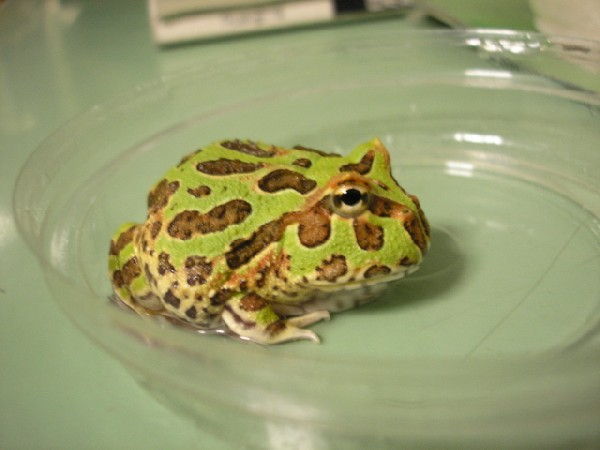 my frog!