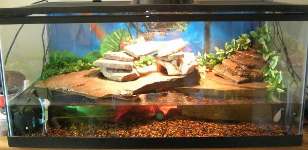 Semi-Aquatic+Turtle+Tank+Setups Semi Aquatic Turtle Tank Setups http ...