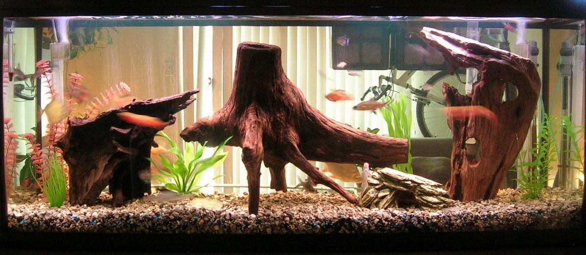 55 Gal freshwater setup