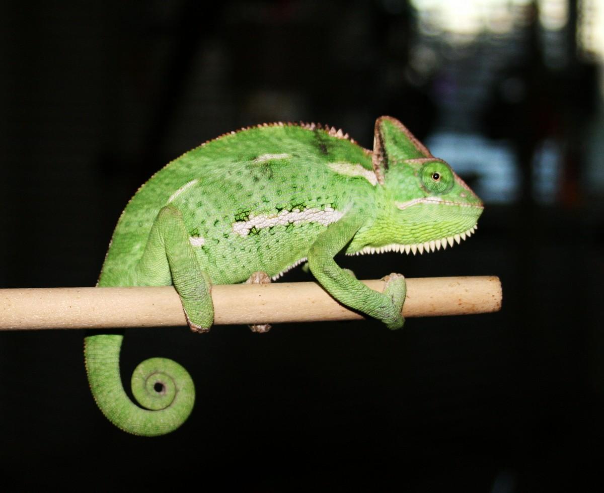Joyce on a stick