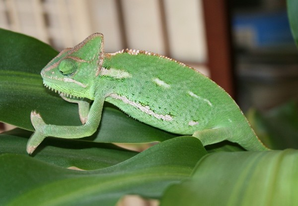 veiled climbing plant2