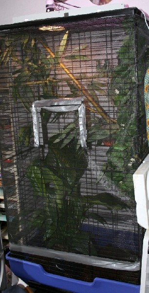 Joyce's cage