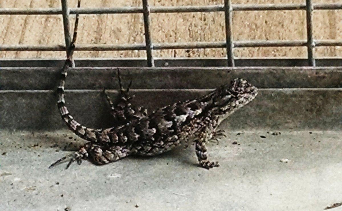 Fence Swift, Williston, FL