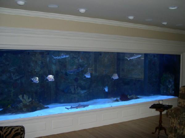 my fav wall aquarium