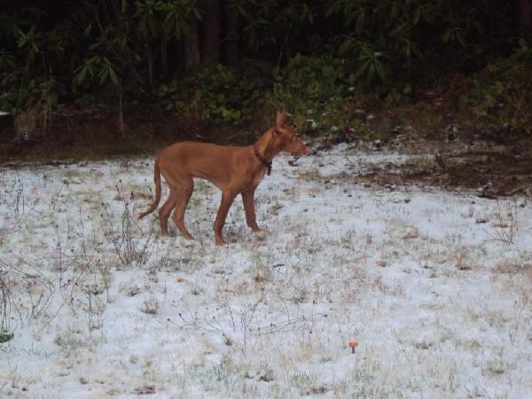 Saar's first snow