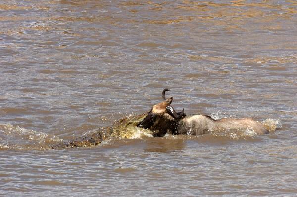 Two Words- Crocs Rule!