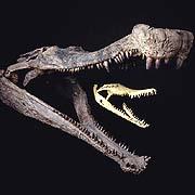 SuperCroc Wasn't A Regular Croc