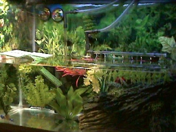 several box turtles live in turtle habitat
