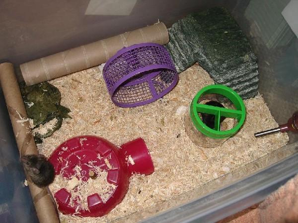 mice setup