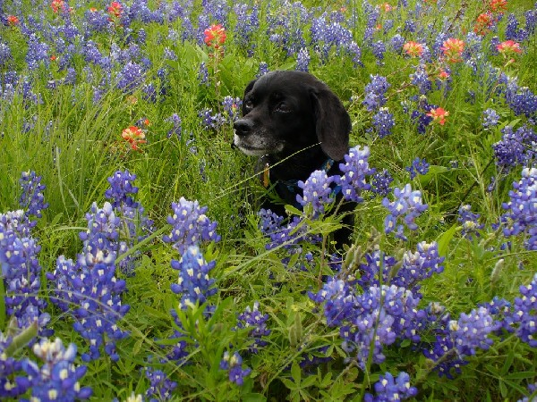 Ashley in the Bluebonnets