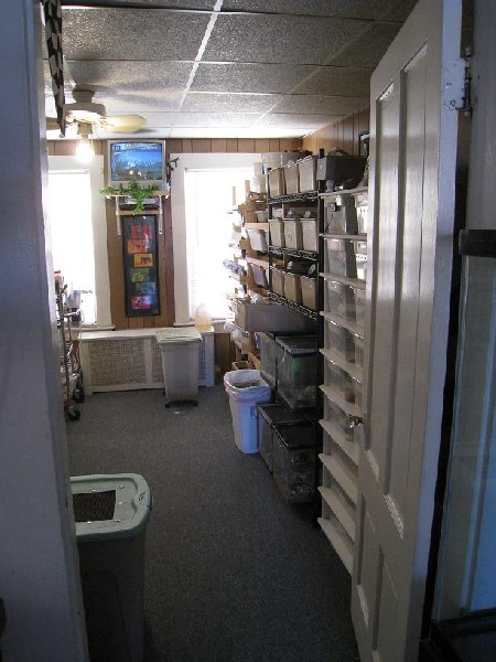 Updated pics of our herp room