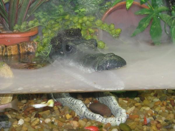 Kingsnake Com Photo Gallery Tree Frogs Mossy Frog Tank Setup
