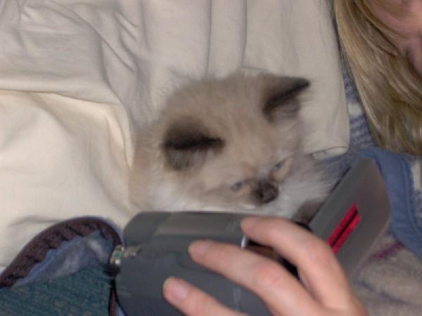 Teddie watching his video