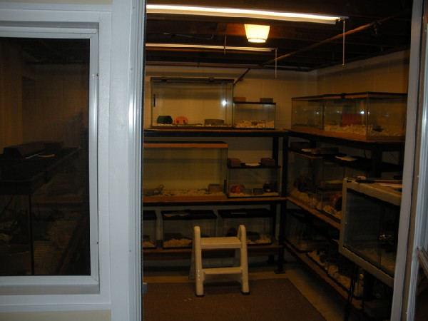Reptile room inside