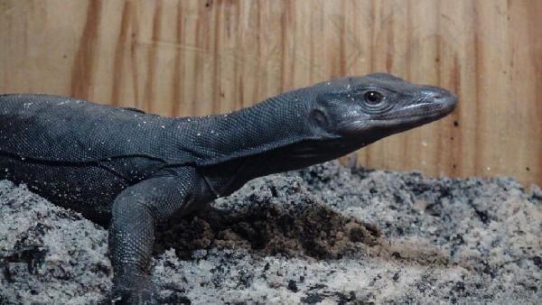 Black Dragon Juvie