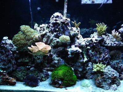 salt water reef