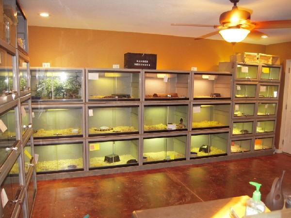 My New Reptile Room