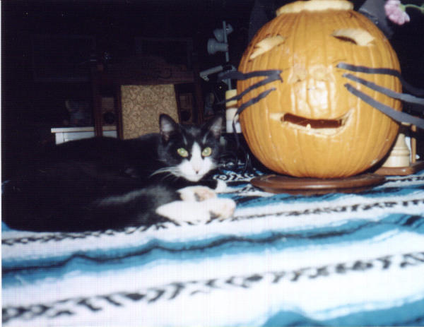 ZELDA and the Pumpkin.