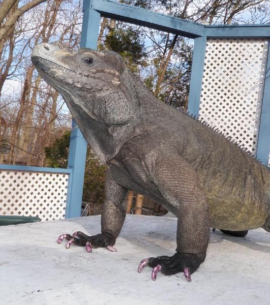 Iguana, uploaded by kingsnake.com user revolutionmellon