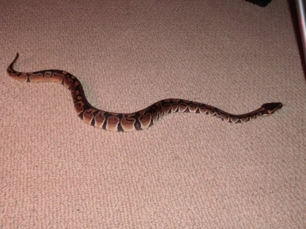 can anybody tell me what morph he is if any?