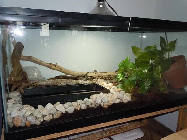 Kingsnake Com Photo Gallery Member Galleries Garter Snake Terrarium