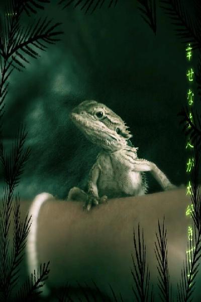 3 month Beraded Dragon. ;)