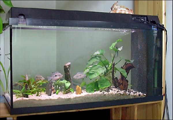 t. meeki 96l aquarium