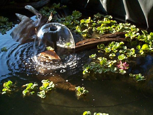 Pond Veggies