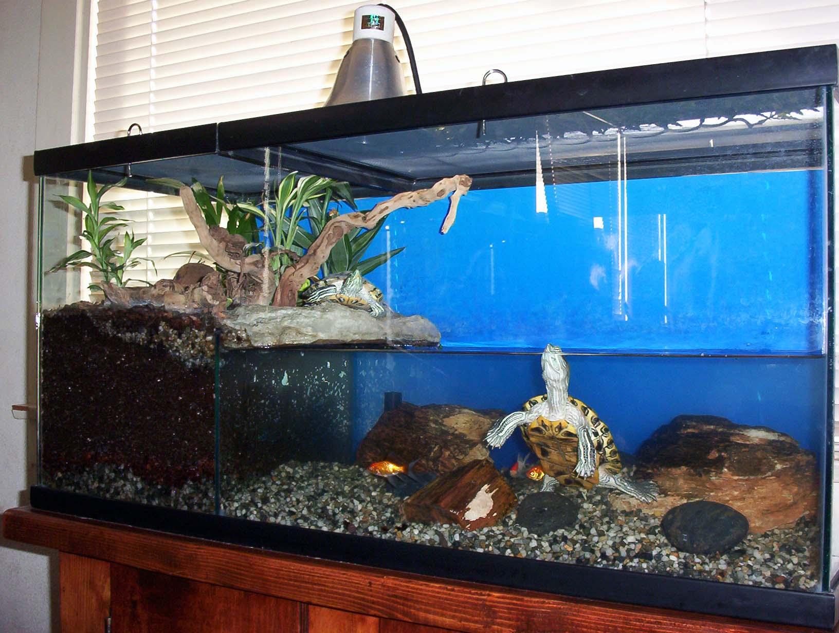 Черепашки красноухие уход в домашних условиях