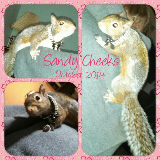 Sandy Cheeks the squirrel
