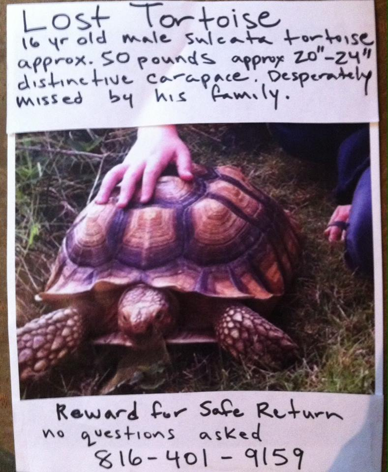 PHINEAS stolen male sulcata REWARD