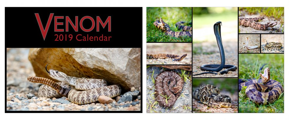 Cover and Bonus Content for the Venom 2019 Calendar