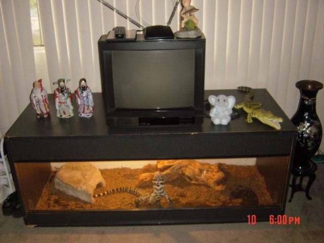 kingsnake com photo gallery reptiles and amphibians custom tank