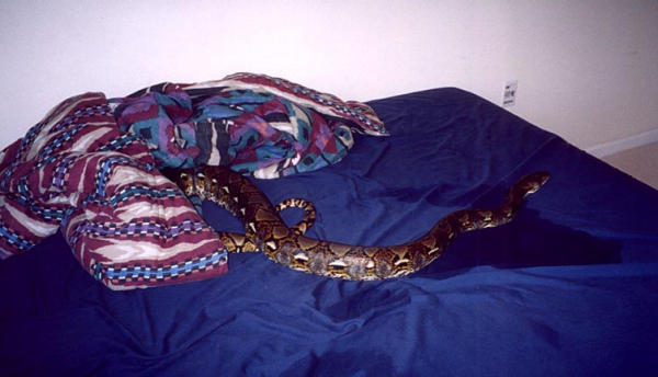 My retic fluffy