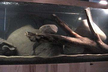 african river tank