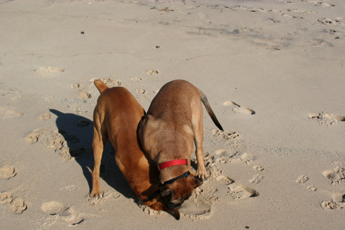 Tyson&Bruno4