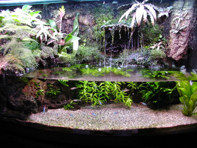 thoughts on paludarium/river tank