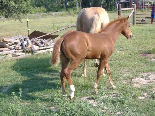 Kasey 3 months old