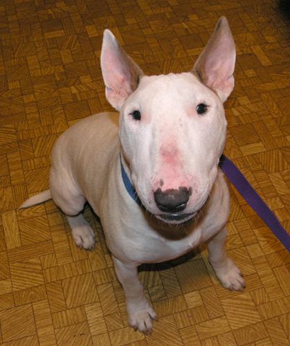 Chico Dog Rescue