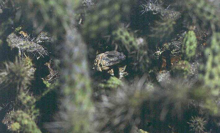 Roca Lobos Varius