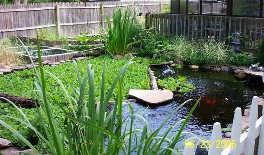 Slider turtle pond
