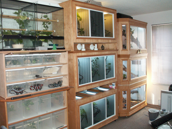 Our new reptile room ...