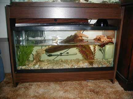 Musk Turtle Tank