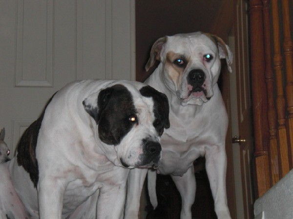 AmBull Pair
