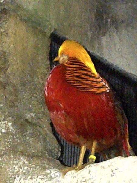 Niagara Falls Aviary