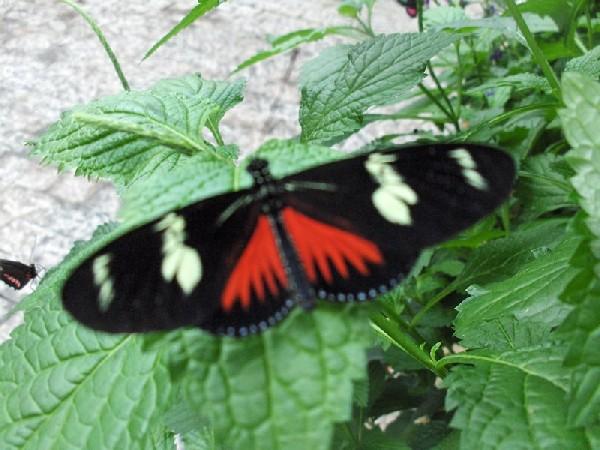 Niagara Falls Butterfly farm