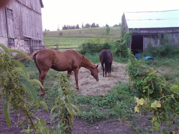 Horses at Camp Grubby