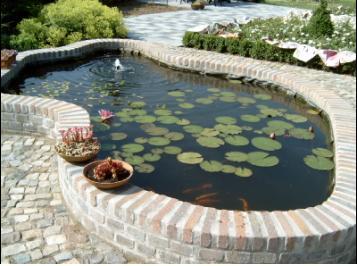 Gold carps pond